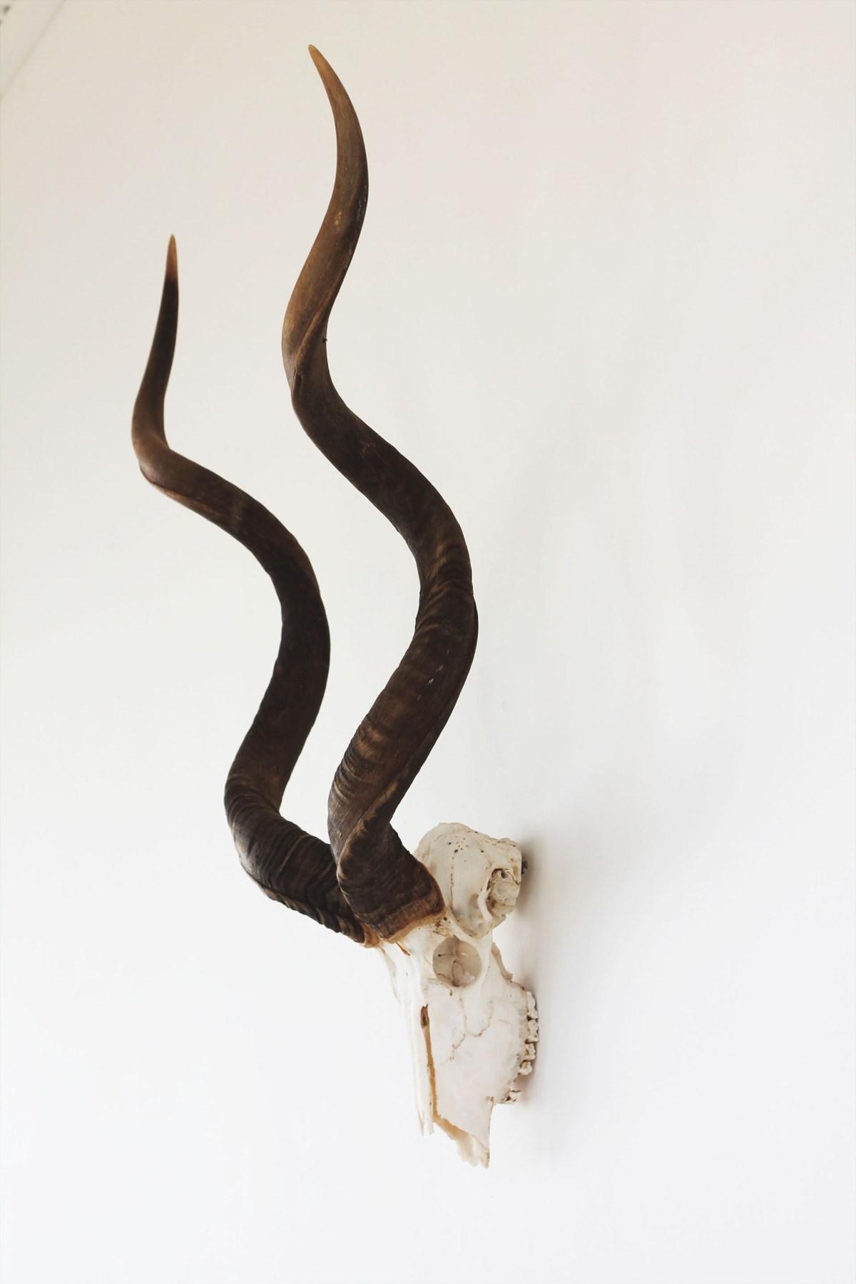 spa horns 2