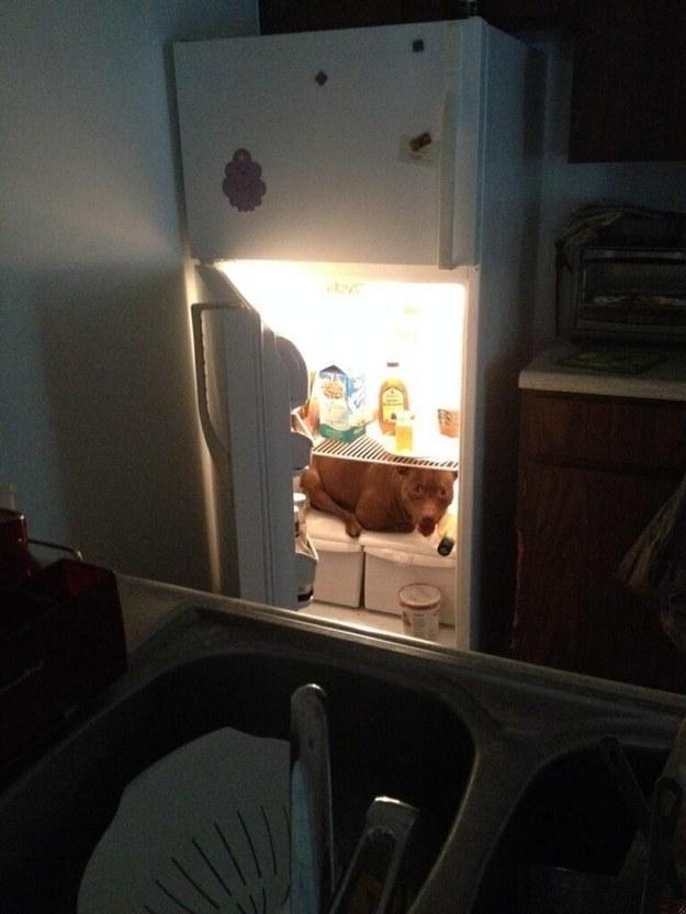 pitbill kjøleskap