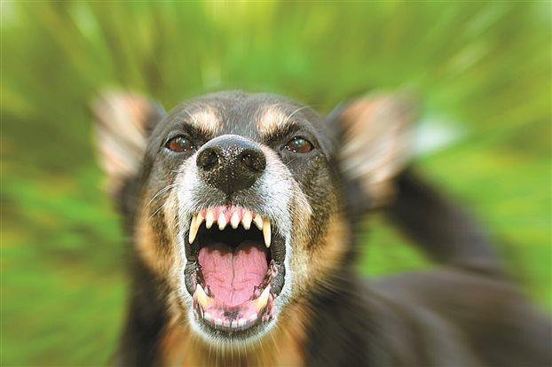 Αποτέλεσμα εικόνας για λυσσασμένος σκύλος