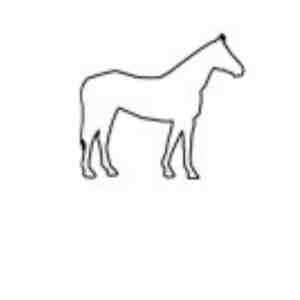 134 Pferd