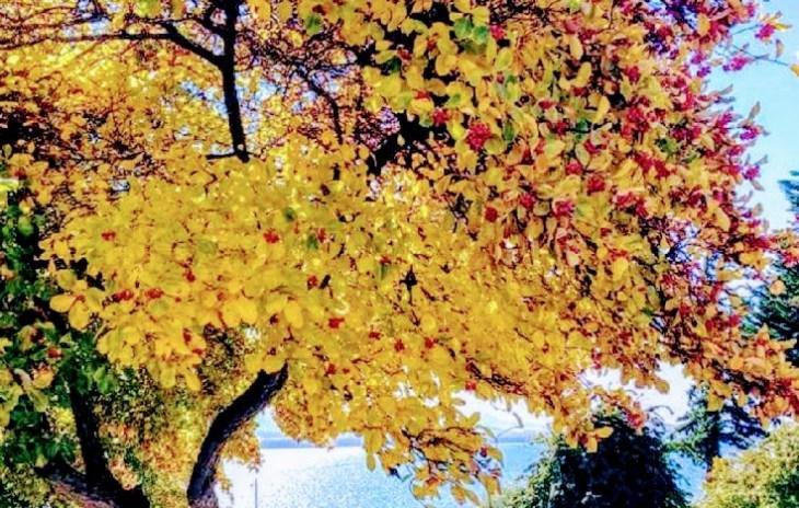 Bariloche no outono