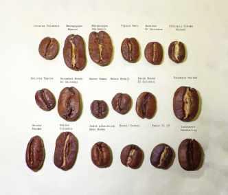 2_differentes_variete_coffea_arabica_laurina_cafe_reunion