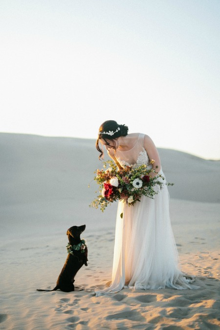 Adorable dachshund and bride