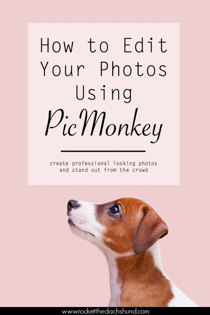 How to Create Professional Photos Using PicMonkey