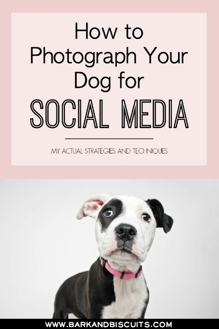 How to Photograph Your Dog for Social Media