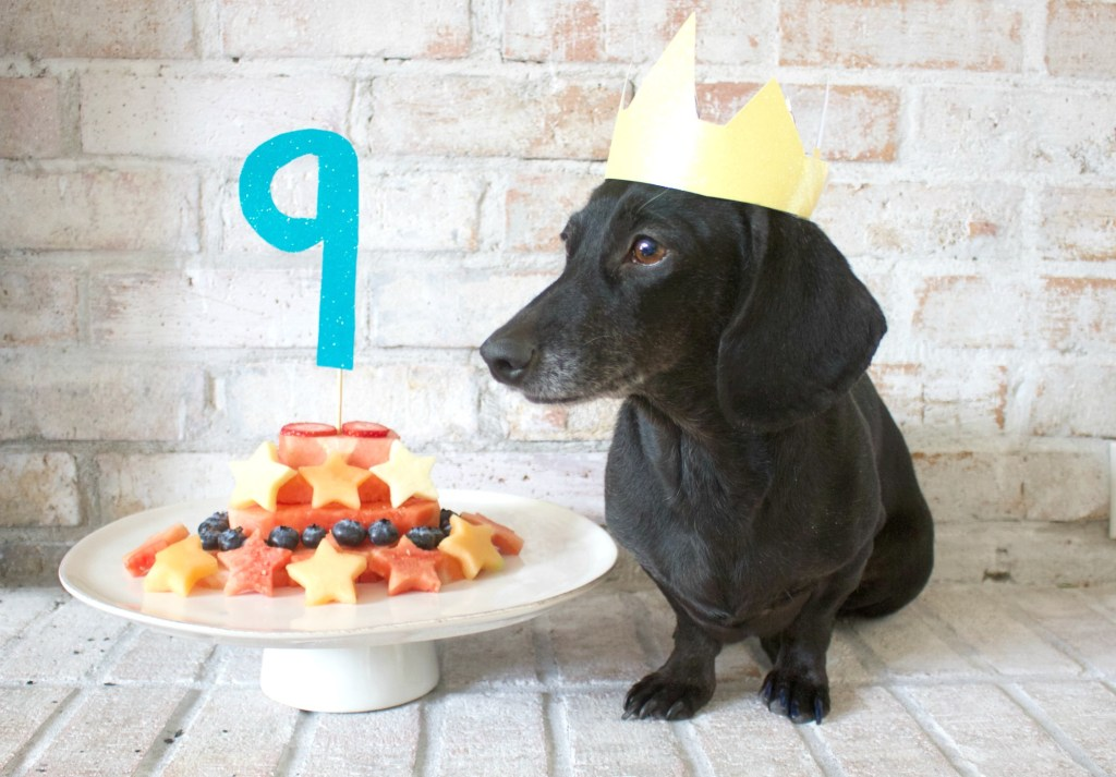 dachshund and birthday cake