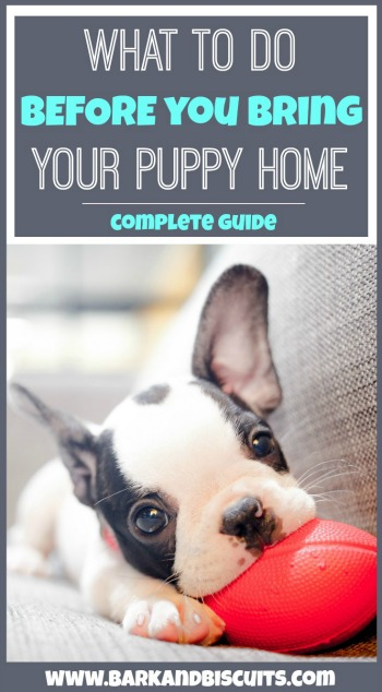 What to do BEFORE you bring your new puppy home