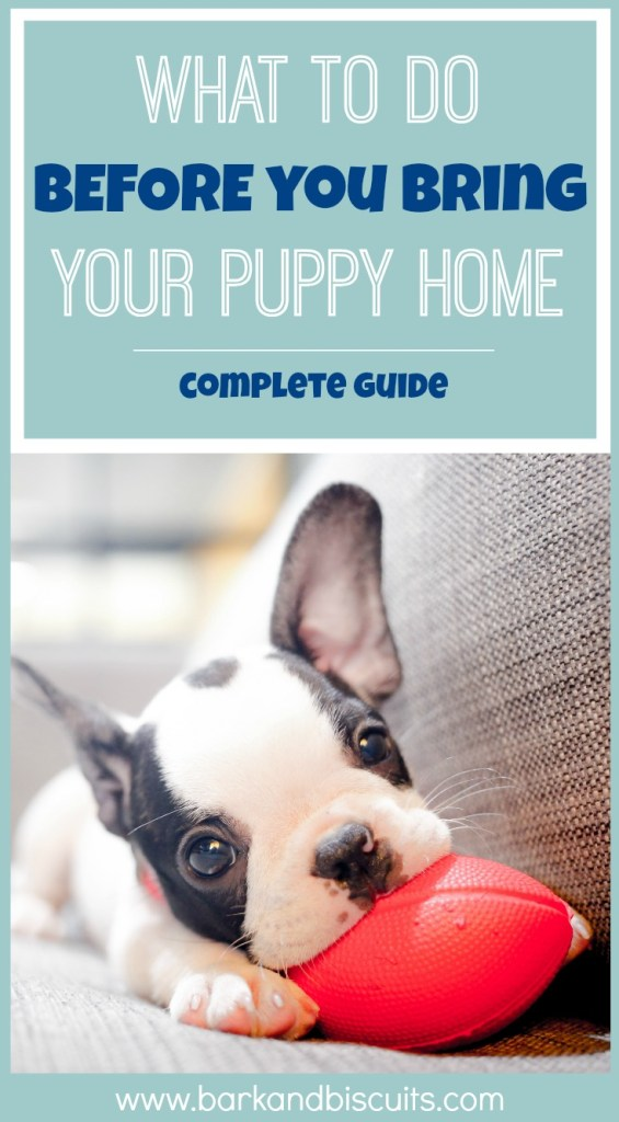 New Puppy Guide - What to do BEFORE you bring your puppy home