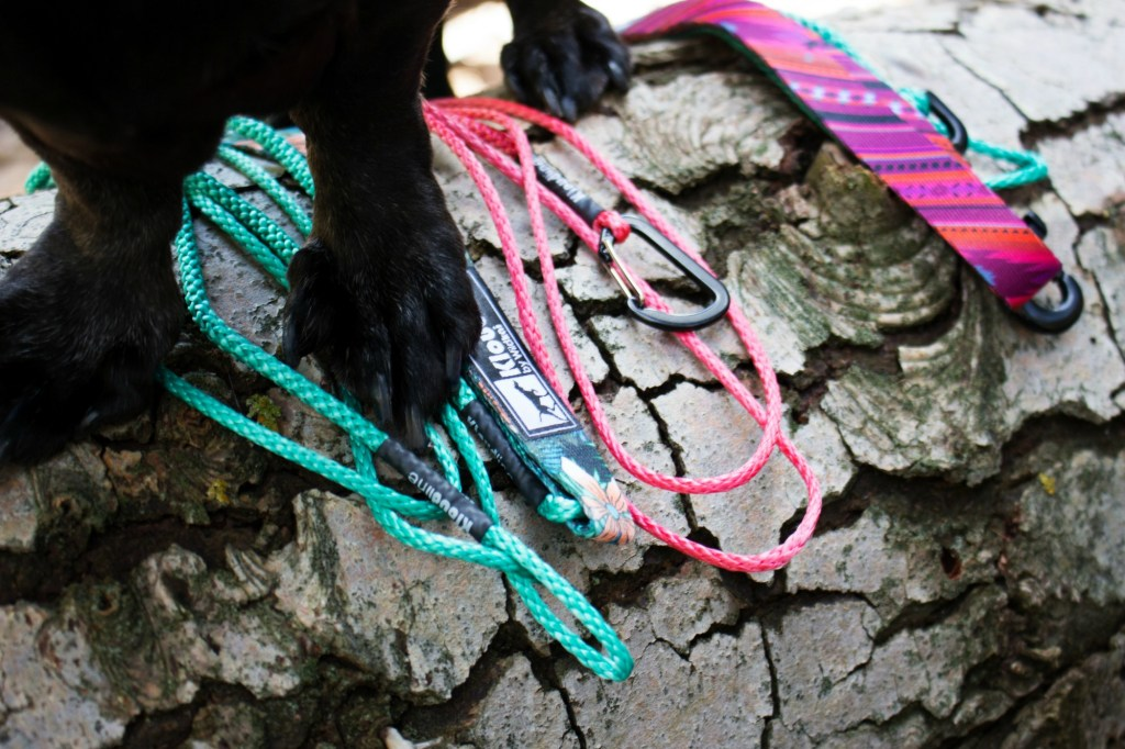 Colorful dog leashes