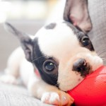 What To Do BEFORE You Bring Your Puppy Home – Complete Guide