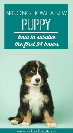 New Puppy Guide - How to survive the first 24 hours