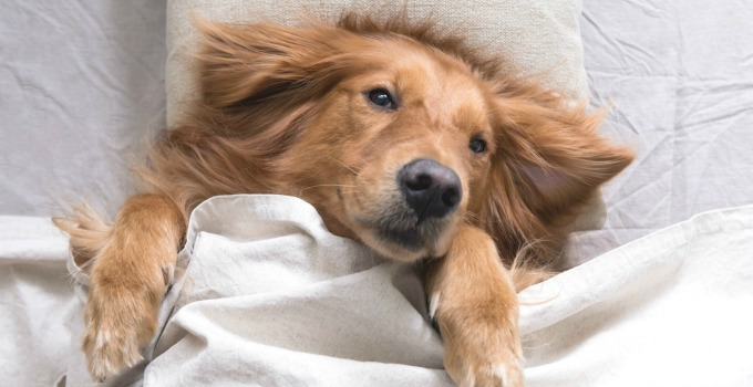 How to Clean Your Dog's Bed Naturally