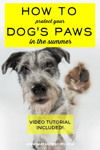 How to Protect Your Dog's Paws in the Summer. Video tutorial included!