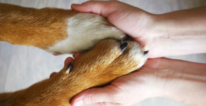 How to Protect Your Dog's Paws in the Summer