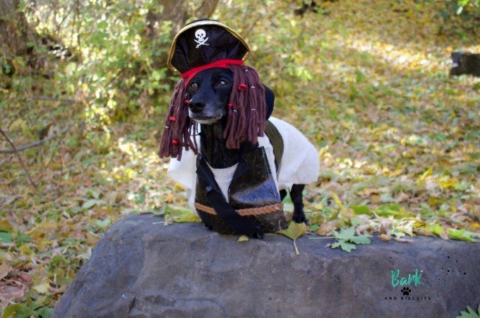 Handmade Pirate Costume for Dogs
