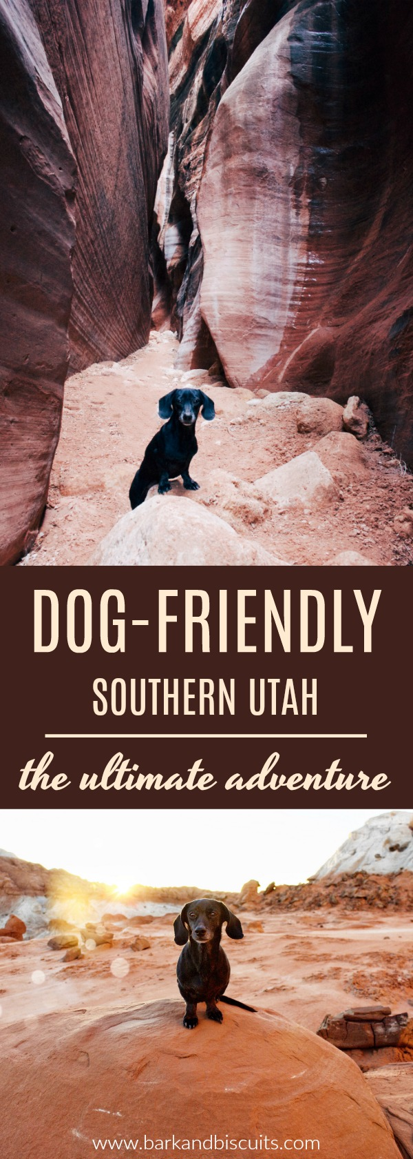 Dog-Friendly Southern Utah-The Ultimate Adventure