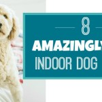 Indoor Dog Games: 8 Fun Games To Play In Winter