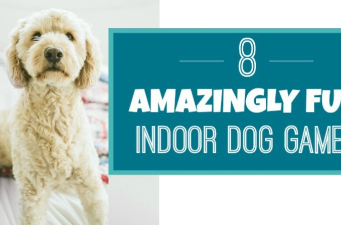 Indoor Dog Games: 8 Fun Games To Play In The Winter