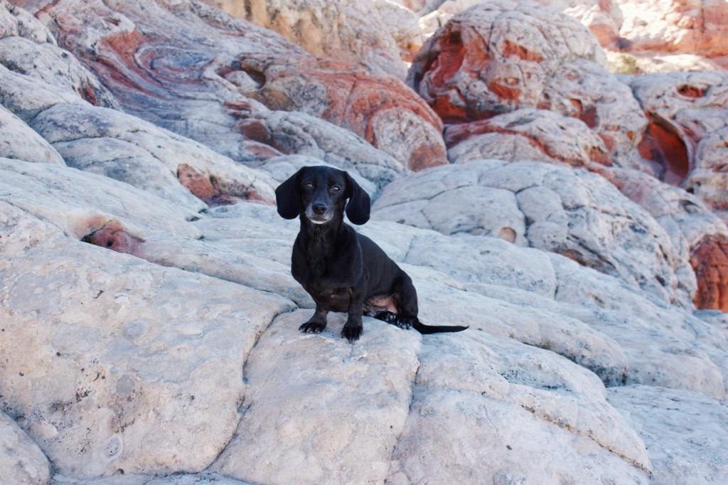 Dog-Friendly Southern Utah-Scenic Adventure