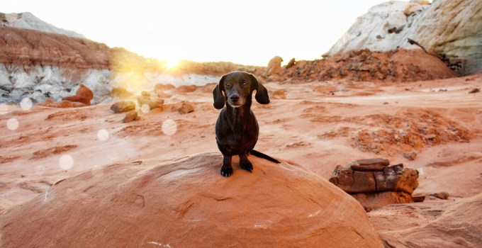 Dog-Friendly Southern Utah – Scenic Adventure