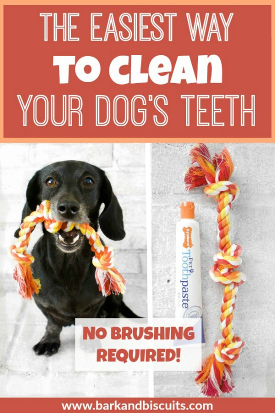 The Easiest Way To Clean Dogs Teeth - No Brushing Required!