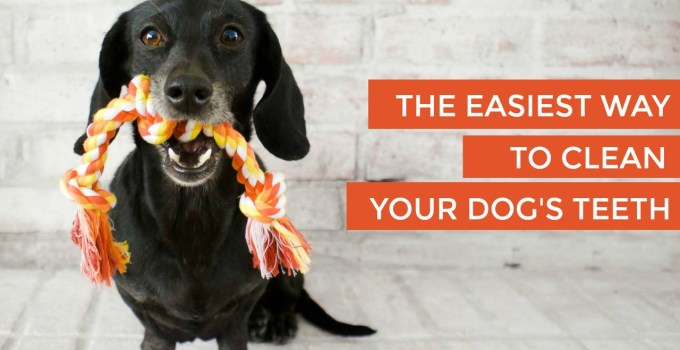 The Easiest Way To Clean Dog's Teeth – No Brushing Required