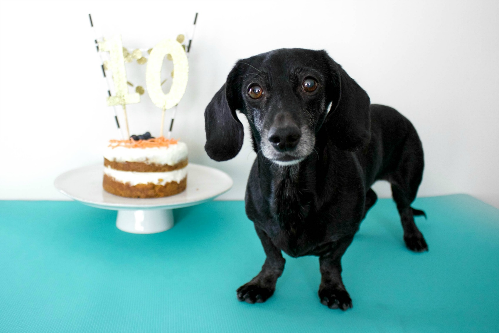 DIY Dog Birthday Cake!