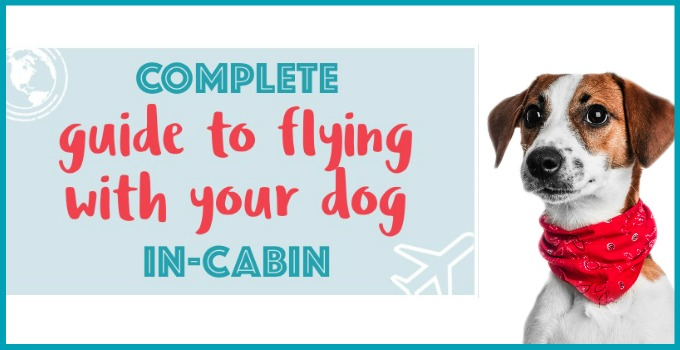 How To Fly With Your Dog In-Cabin. Everything You Need To Know. FREE Download!