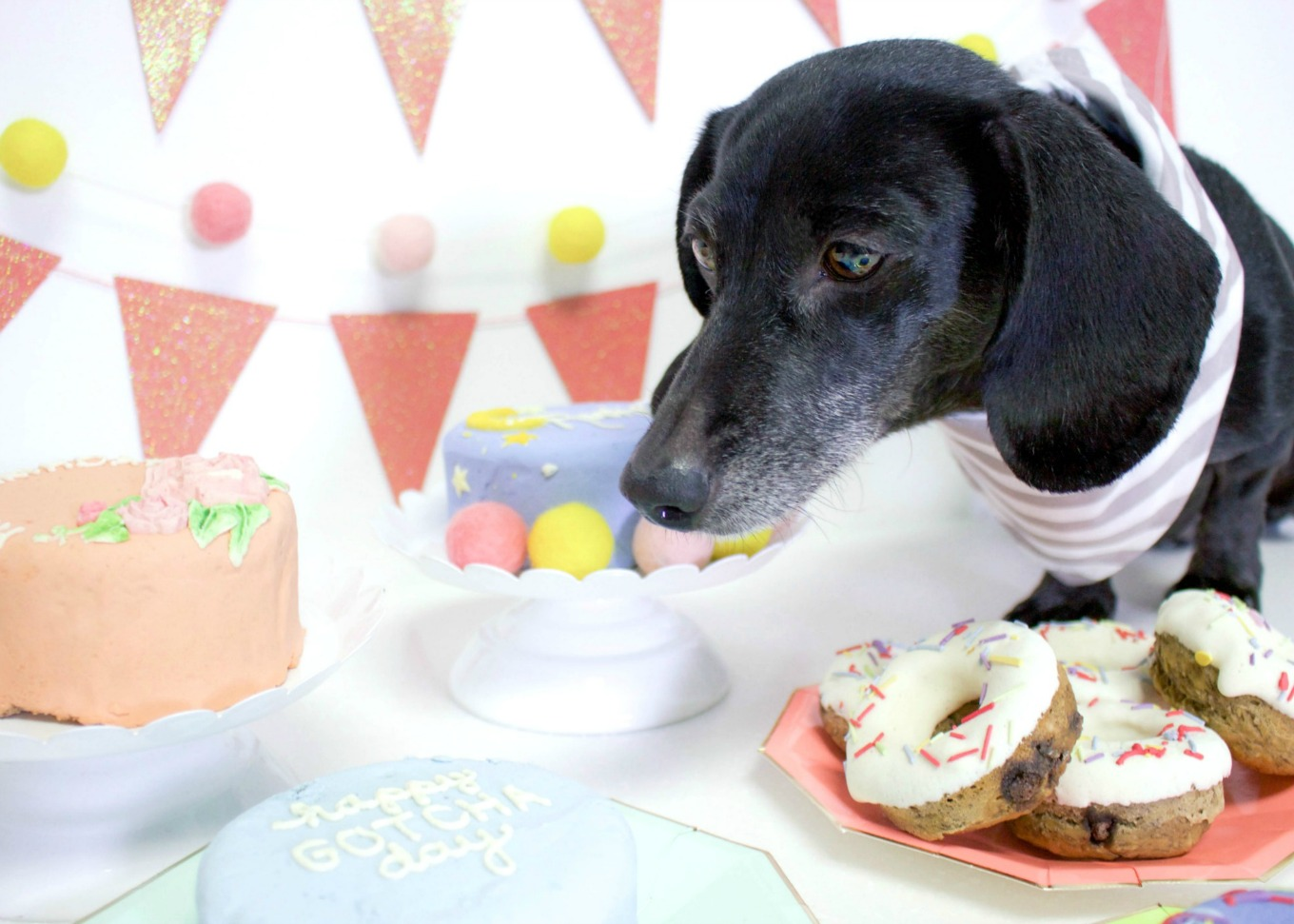 Here Is The Best Way To Celebrate Your Dogs Birthday Spotted Dog