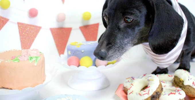 Here Is The Best Way To Celebrate Your Dog's Birthday – Spotted Dog Bakery