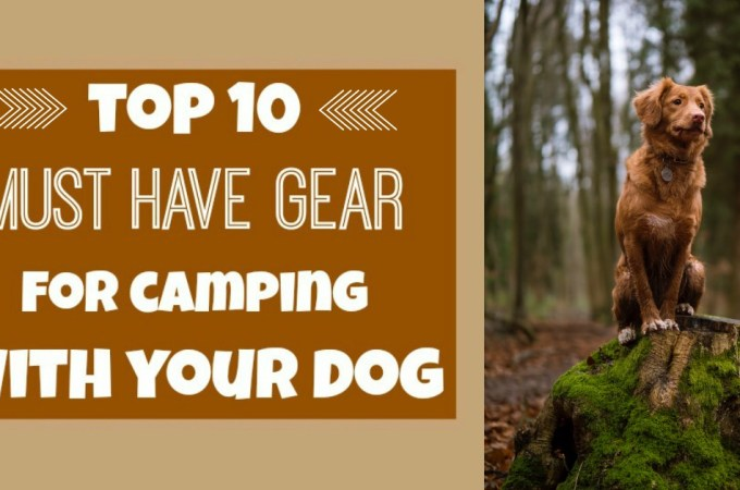 Camping With Dogs - Top 10 Must-Have Gear
