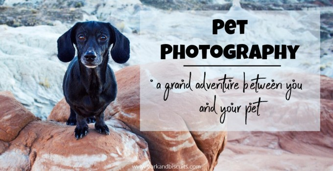 Pet Photography – A Grand Adventure Between You and Your Pet