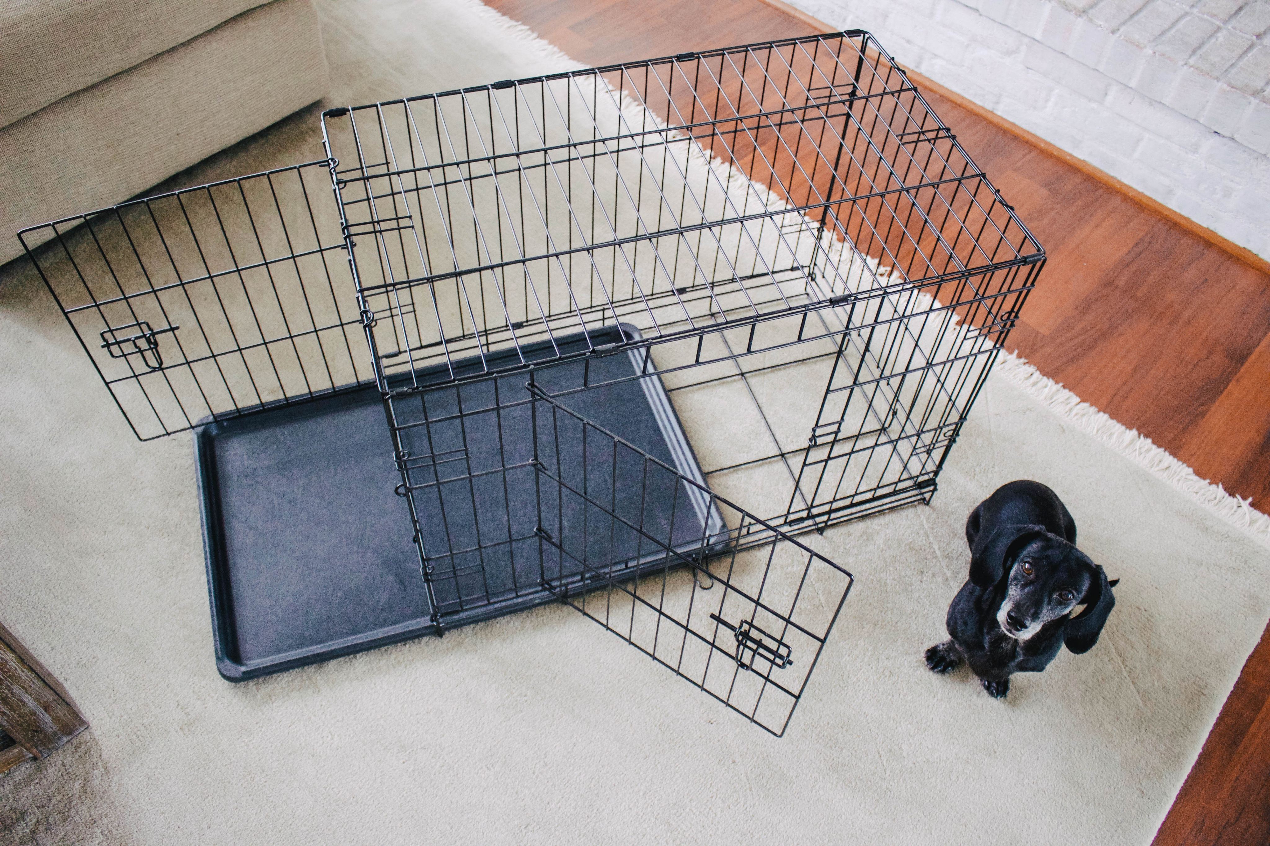 How To Crate Train Your Dog - The Essentials