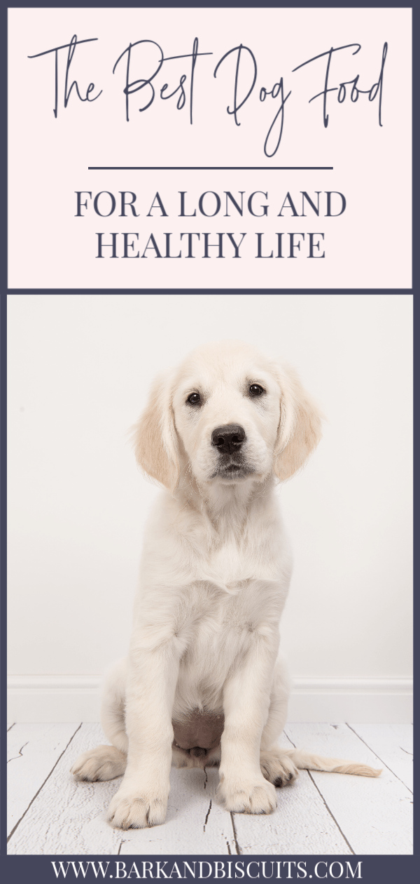 The Best Dog Food For A Long And Healthy Life