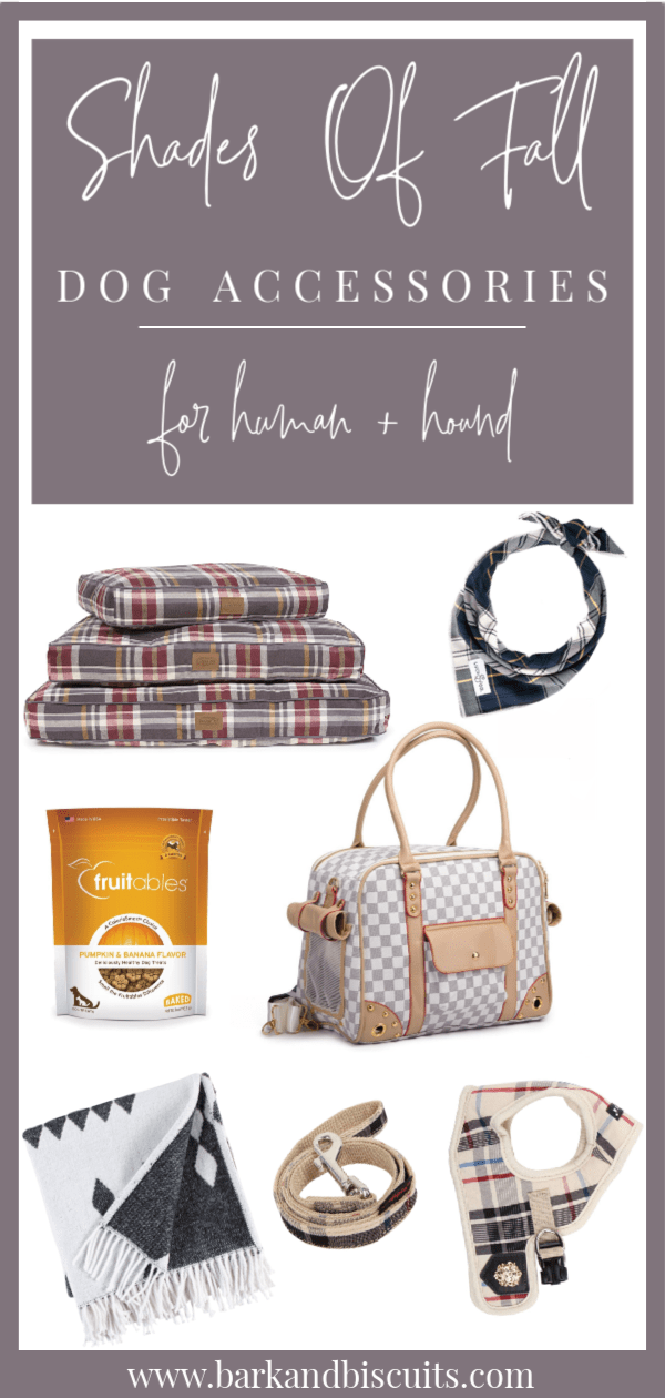 Autumn-Inspired Dog Accessories For Human And Hound!