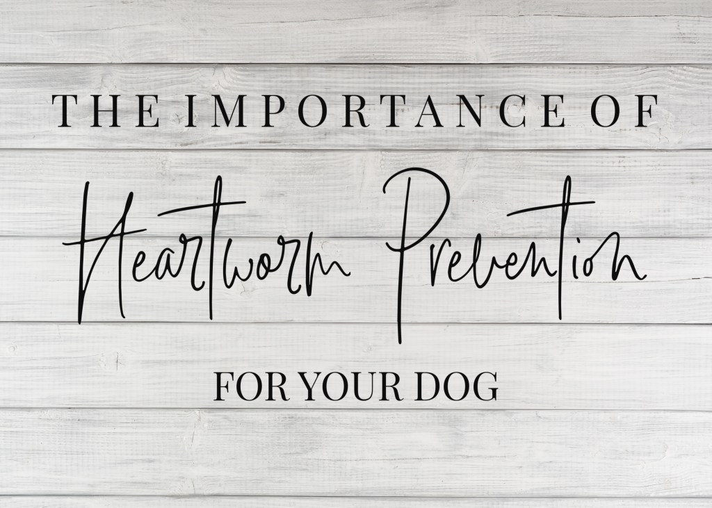 The Importance Of Heartworm Prevention For Your Dog