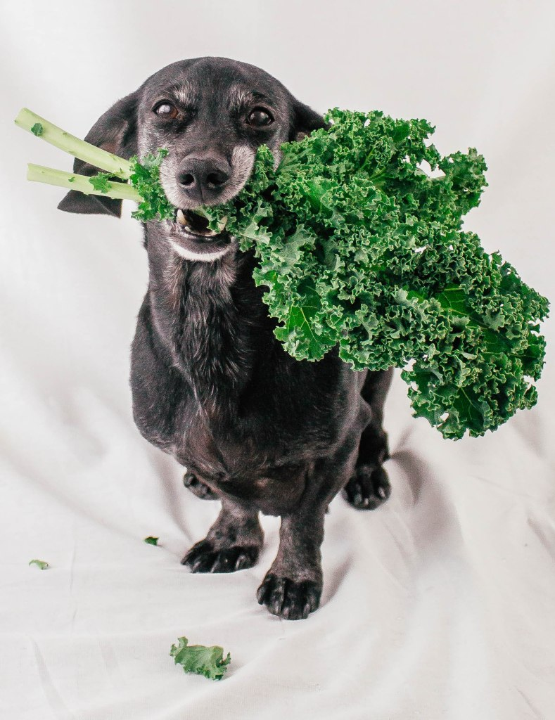 14 Amazing Superfoods For Your Dog
