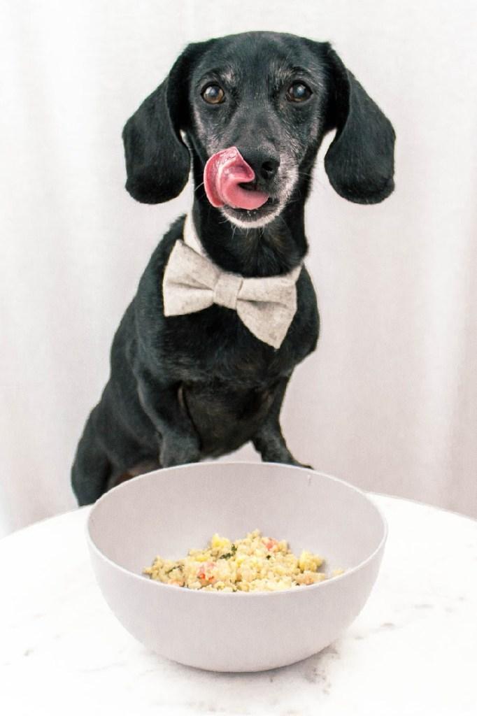 NomNomNow Fresh Dog Food Review