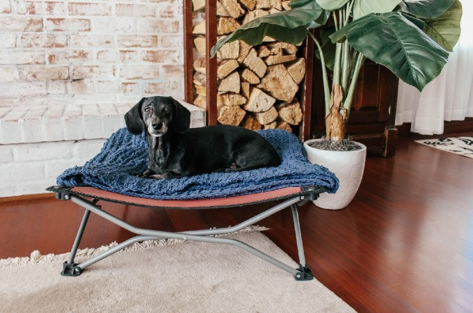 5 reasons you need a dog cot for your pup