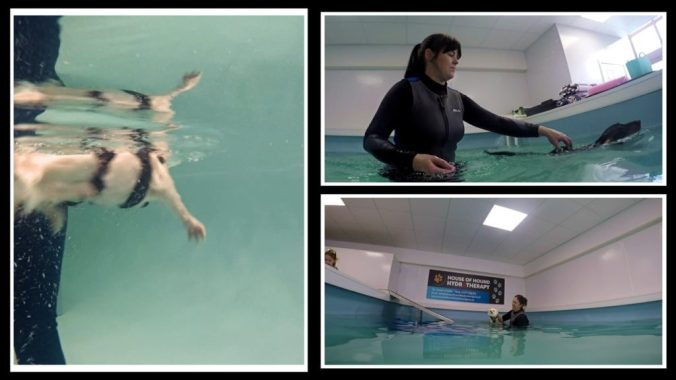 hydrotherapy for dogs in action