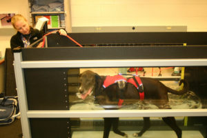 Hydrotherapy for dogs treadmill