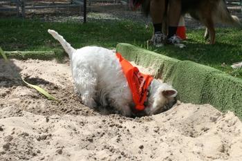 dog dig box