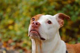 Why do dogs have pink noses - Bark How