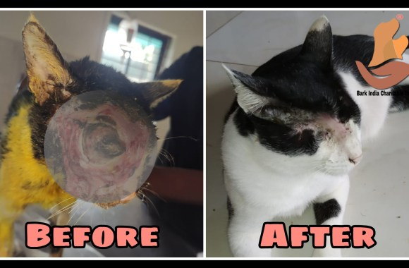 Wonderful recovery of rescued cat with cracked face- Stray cat rescue and treatment