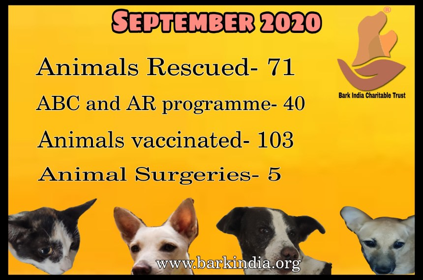Animal Rescue and Treatment- NGO for sick animal rescue and care