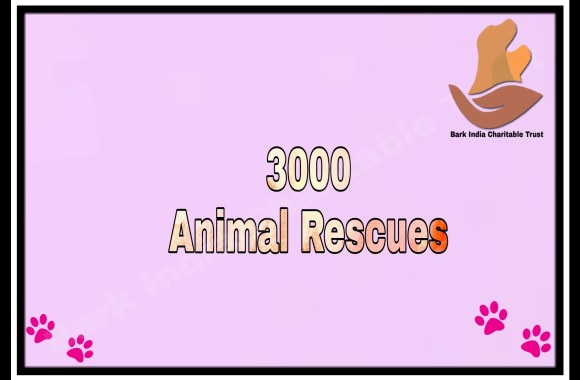 3000 Animal Rescues- A Milestone on the Way to Help Animals