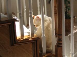 "Frank, the ""barking cat"""