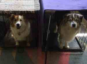 Crated Twins