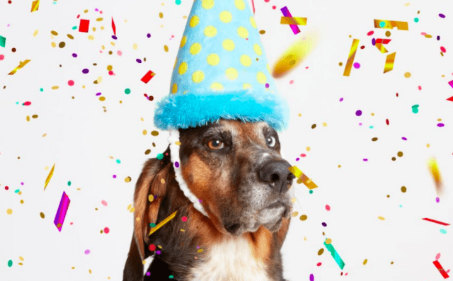 6 Awesome Gifts To Make Your Dog's Birthday Epic