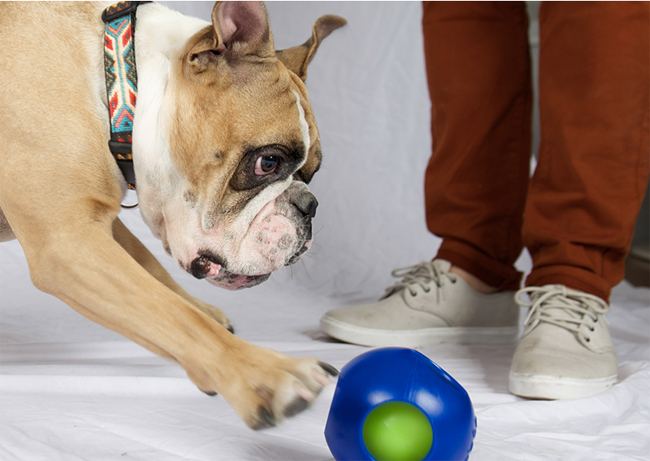 Remote Control Ball Dog Toy